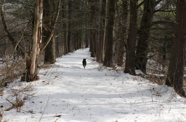New Section of Rail Trail to Be Opened for Winter WIN